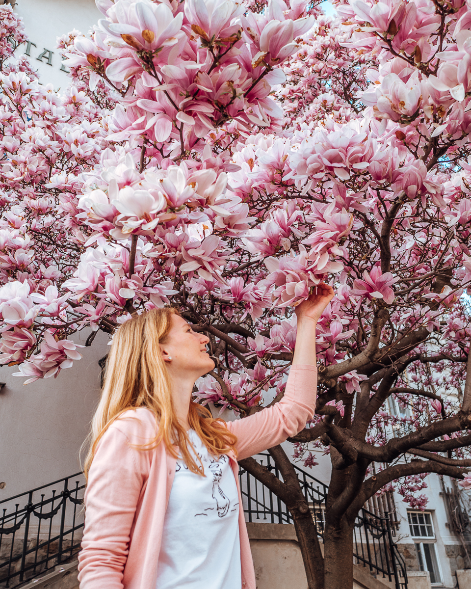 Best Magnolia and Cherry Blossom Locations in Vienna